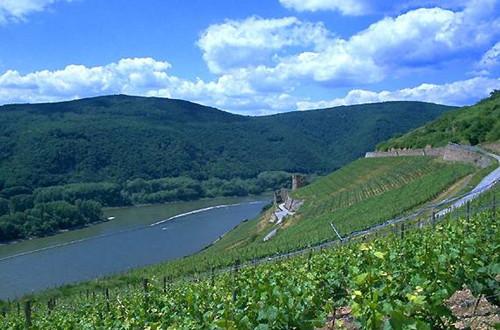 十大德国葡萄酒小知识