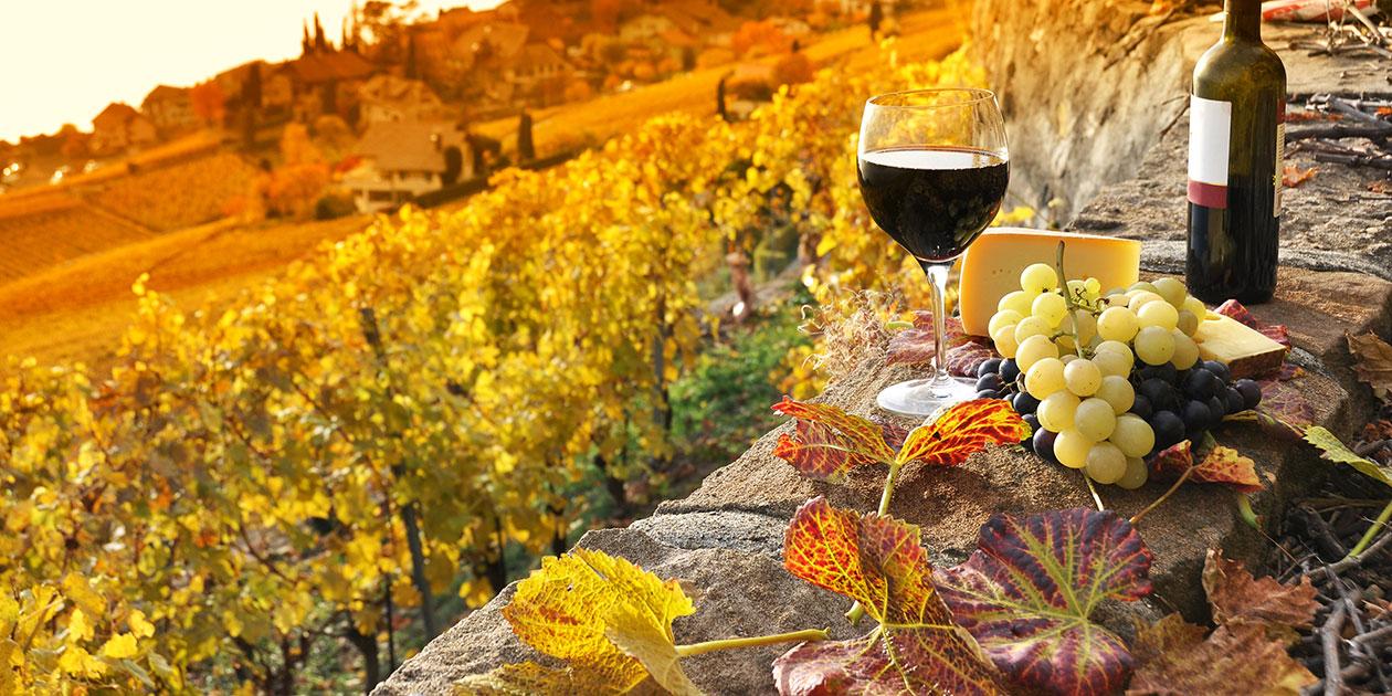2012加州葡萄采收报告