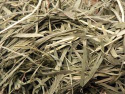Herbacé - 草本的