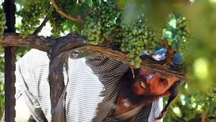 以色列葡萄酒的历史