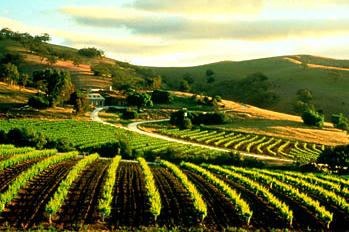 穿越南澳Barossa山谷