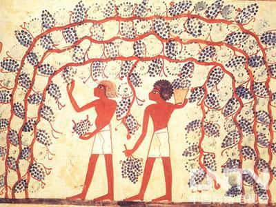 葡萄酒的起源与历史