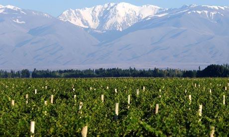 2012南半球葡萄采收报道-阿根廷