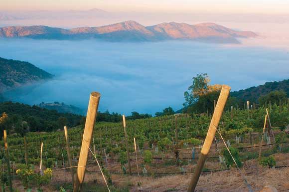 2012南半球葡萄采收报道-智利