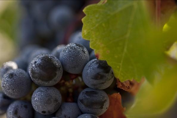 波尔多Bordeaux 2010:波美侯