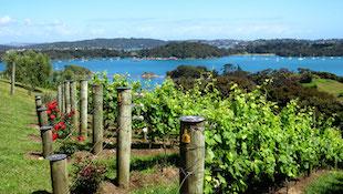 新西兰葡萄酒产区2009年年份概况
