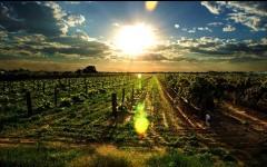 澳洲葡萄酒的三足鼎立