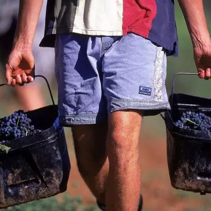 2016年澳大利亚葡萄酒收获报告发布