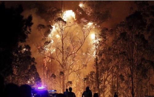 野火入侵西班牙下海湾产区  葡萄园受重创