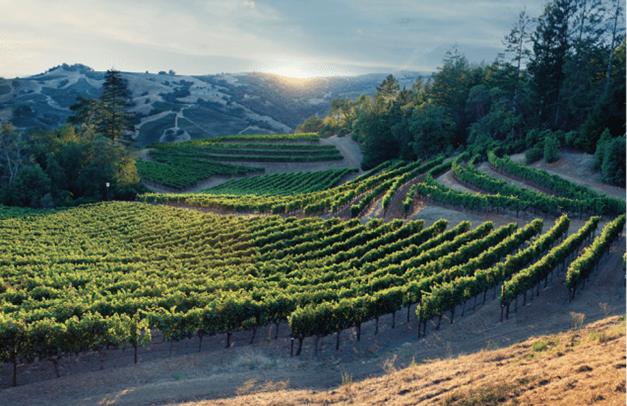 2017年份加州葡萄酒收成喜人(尽管历经极端干旱和致命大火)