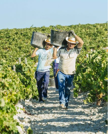 西班牙成为2017年全球第一大葡萄酒出口国   出口总量达22.8亿升