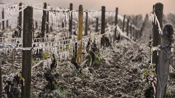 OIV:2017全球葡萄酒产量创60年最低 中国升至第七大生产国