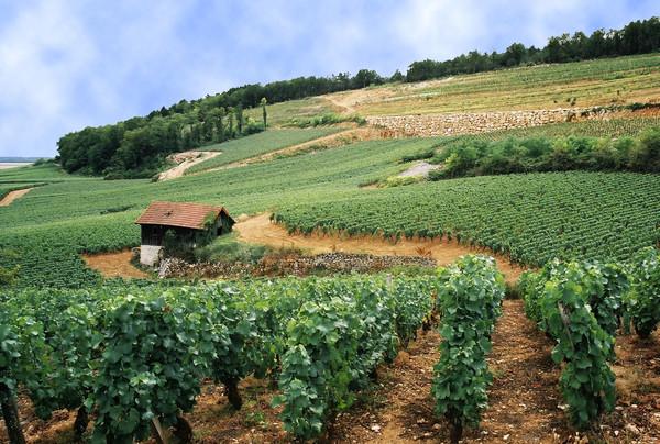世界顶级葡萄园大盘点 | 法国篇