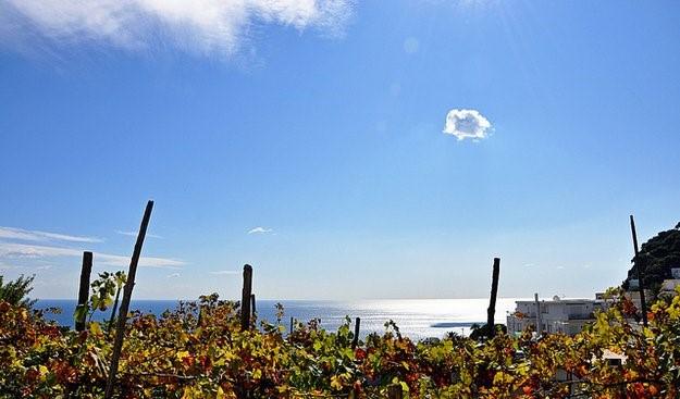 喝腻了barolo和chianti?这些意大利南部的葡萄酒值得一试