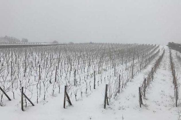 欧洲正经历严冬:大雪覆盖西西里岛葡萄园