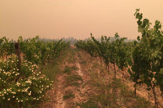 智利空加瓜谷山火肆虐 葡萄园进入红色警报应急状态