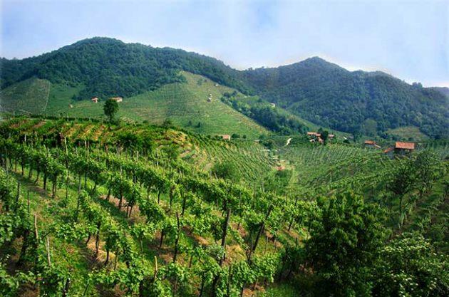 意大利普罗赛科起泡酒产区申请加入联合国教科文组织世界文化遗产名录