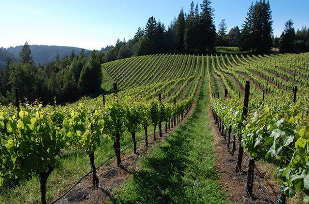 美国葡萄酒出口贸易营收创新高