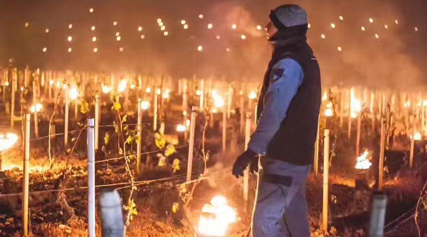 到底要经历多少磨难,才能酿出我们杯中的葡萄酒?