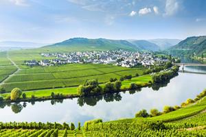 世界上最贵的白葡萄酒,竟产自世界最美河畔!