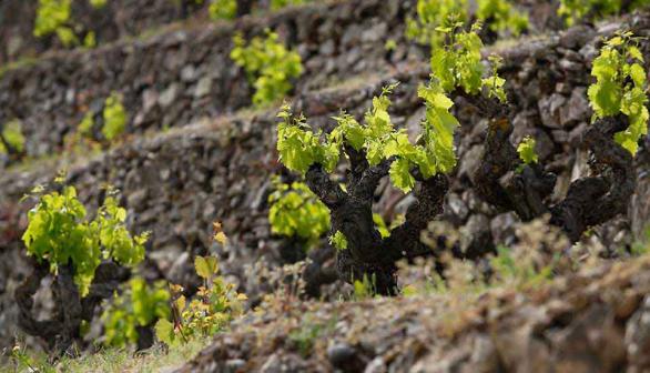 我们到底为什么喜欢喝葡萄酒?