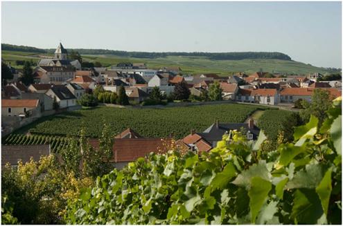 有一个小村庄,出产着全世界最好的香槟!