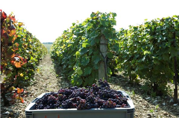 红色香槟—法国隐藏最好的秘密