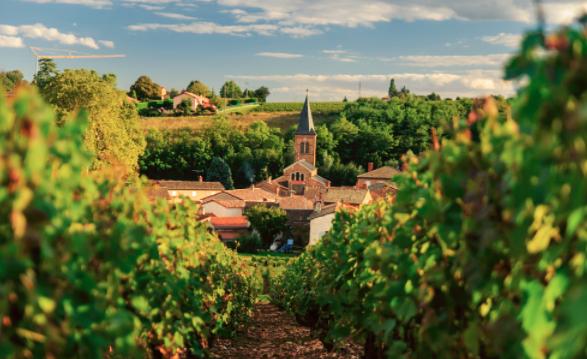 谢谢博若莱,让我们的葡萄酒世界不那么单一
