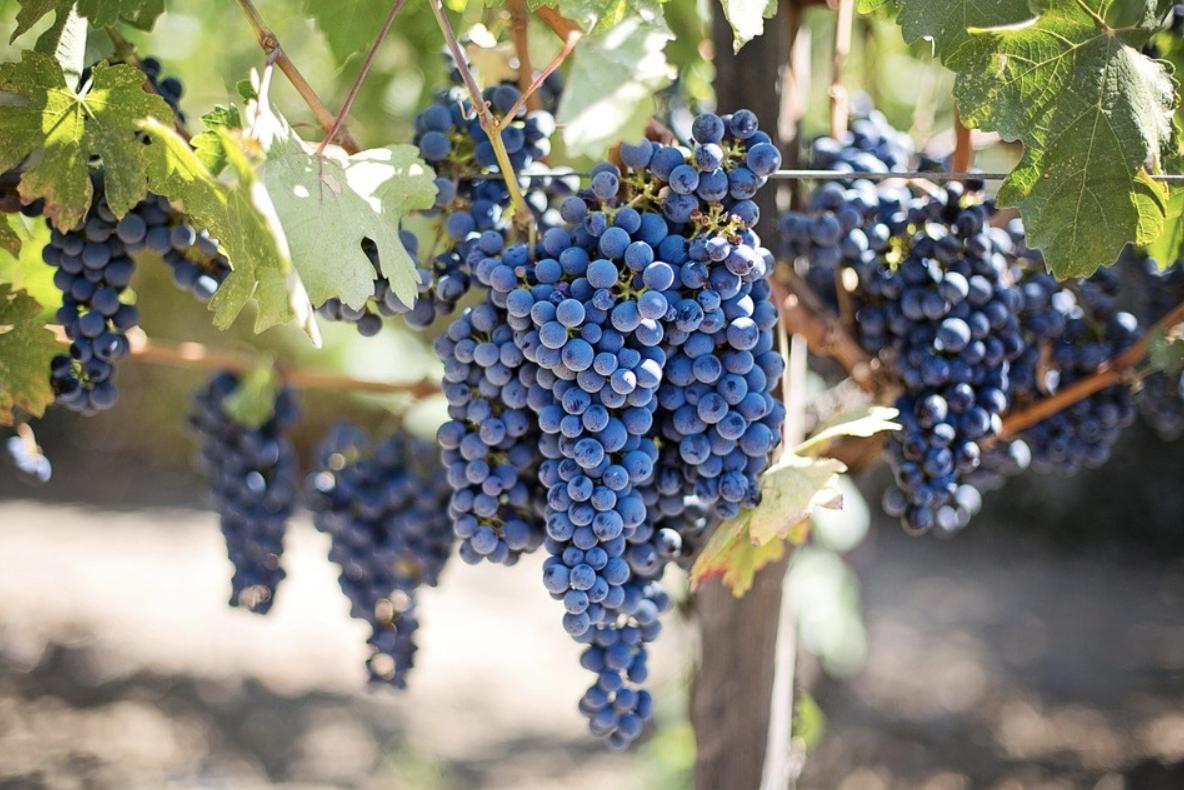 全球酿酒葡萄种植面积Top10,我一定不是最后知道的!