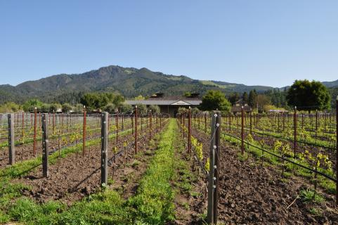 地标酒庄Landmark  Vineyards