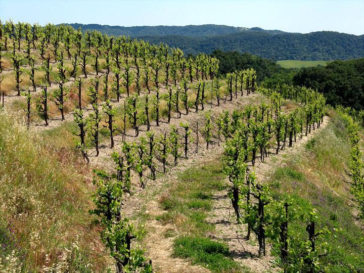 萨克斯姆酒庄Saxum Vineyards