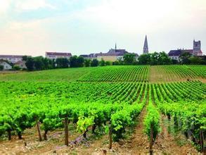 马特莱酒庄Domaine Bonneau du Martray