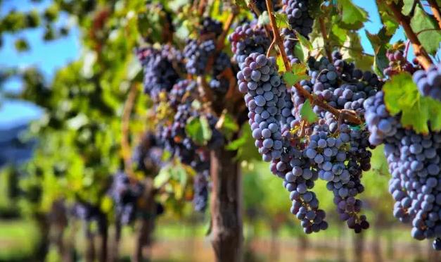 【上海】新年第一课|红樽坊教你变身葡萄酒达人